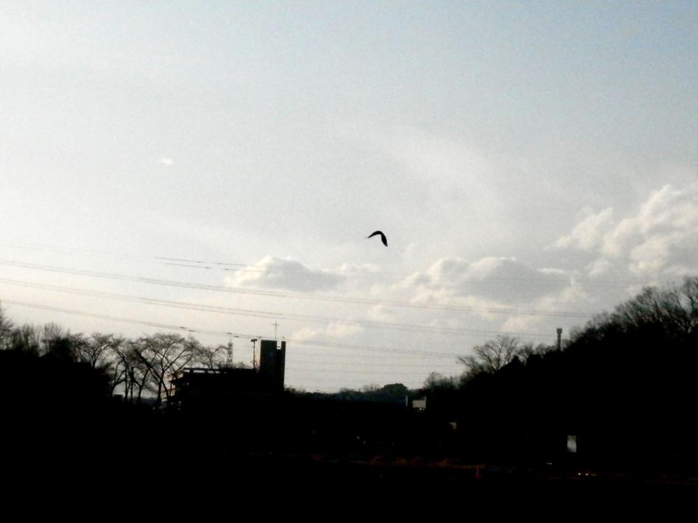 上空を旋回する鳥