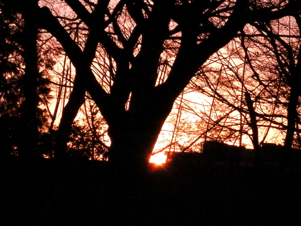 太い木の根元に沈む太陽