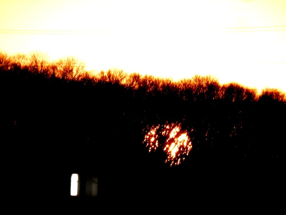 林の中に入った太陽