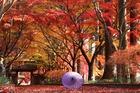 和傘とモミジ